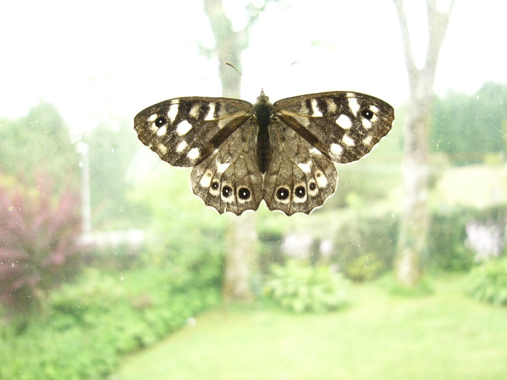 speckled-wood1-1024x768.jpg