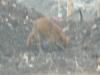polmadie-wildlife-002-1024x576.jpg