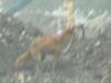 polmadie-wildlife-003-1024x576.jpg