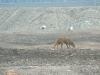 polmadie-wildlife-005-1024x576.jpg