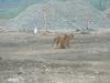 polmadie-wildlife-006-1024x576.jpg