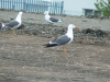 polmadie-wildlife-007-1024x576.jpg