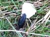 polmadie-wildlife-009-1024x576.jpg